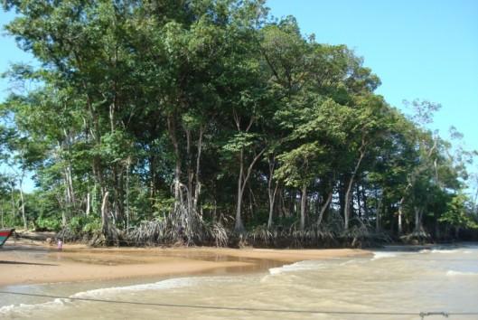 -Best of Suriname - Galibi strand