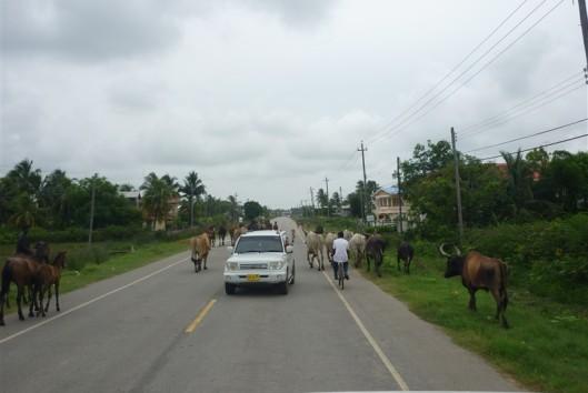 -Guyana (8)
