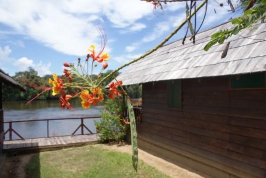 danpaati suriname river cabins