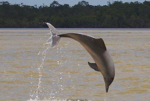 dolfijnentrip-waterproof-suriname