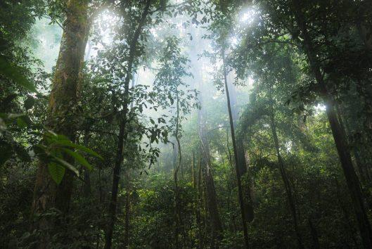 surinaams regenwoud