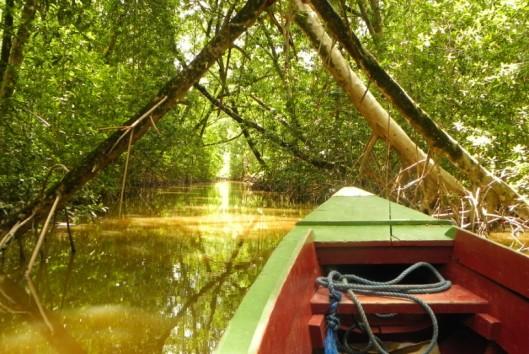 warappakreek mangrove