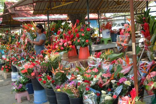 bloemenstands paramaribo fotoalbum