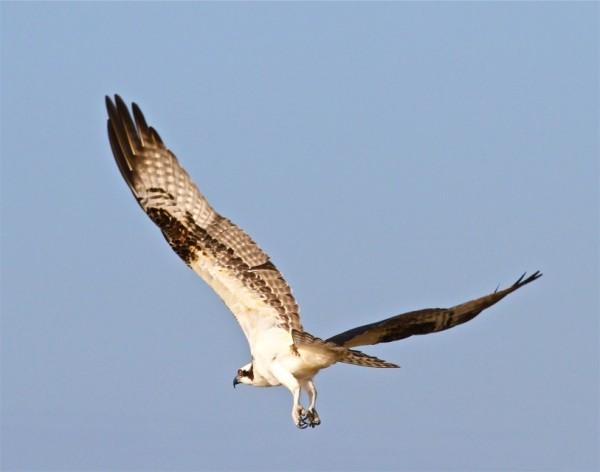 vogel vliegen