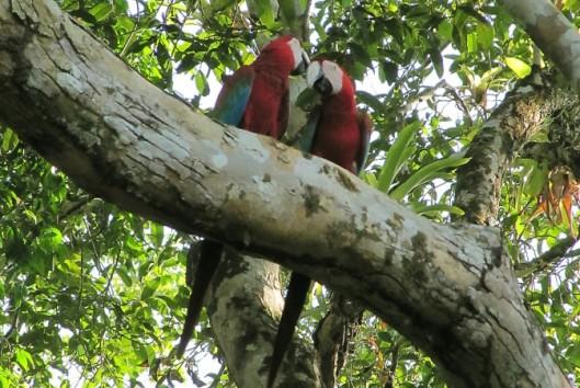 avanavero jungle avontuur vogels