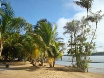 strand rivier suriname