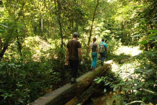 pingpe jungle wandeling