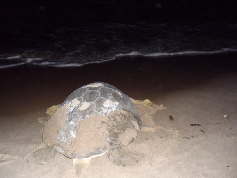 natuur avontuur zeeschildpad suriname