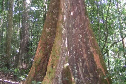 brownsberg suriname woudreus