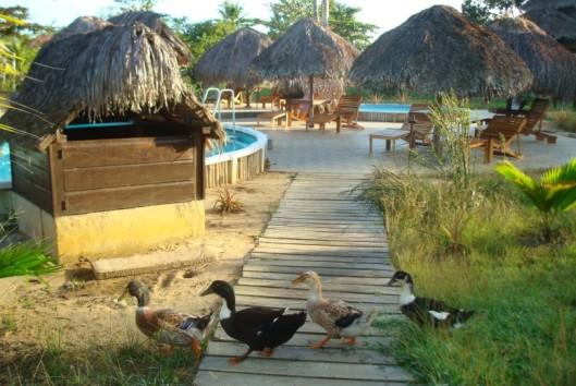hotel de plantage vogel