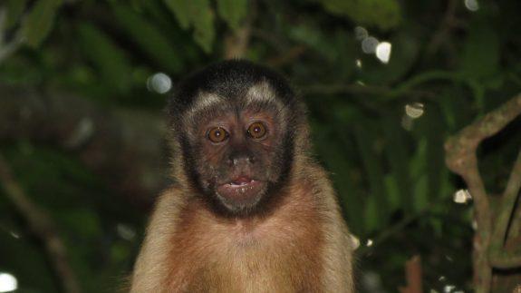 Monkey Alert Suriname Dieren Dick Spijker
