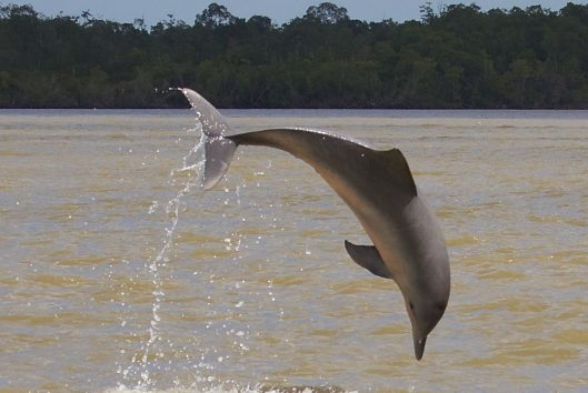 dolfijnentrip waterproof suriname