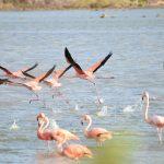 bullebaai flamingo curacao
