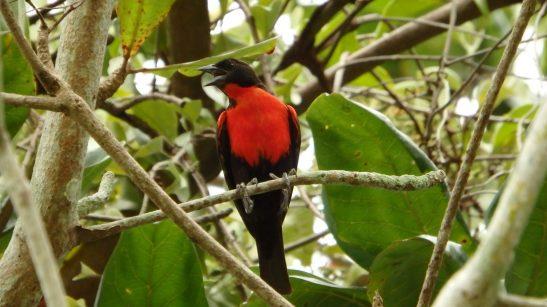 Meerdaagse excursies birdwatching vogelkijken