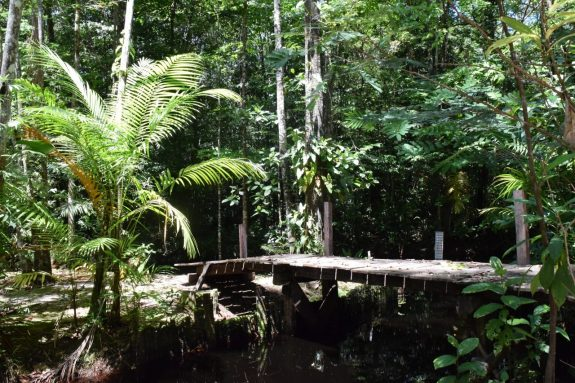 true paradise Palulu