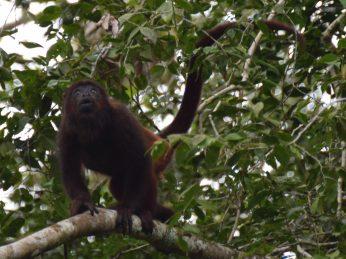 wanawiro-avanavero-suriname-wildlife