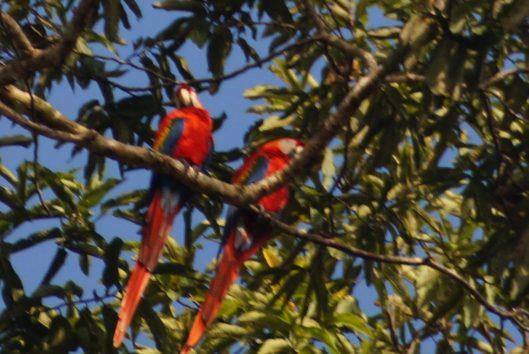Reis Suriname Helene oktober  kabalebo