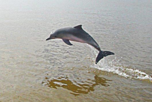 dolfijn jump JPG 2