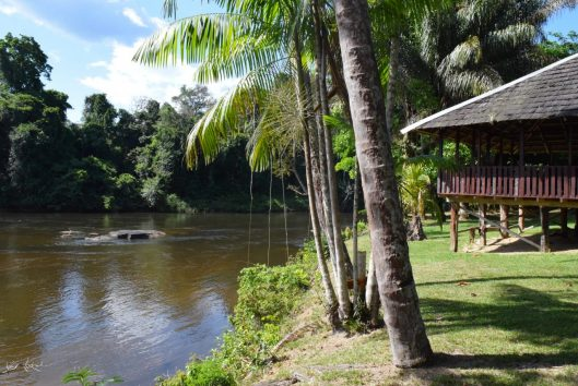 suriname holidays awarradam (23)