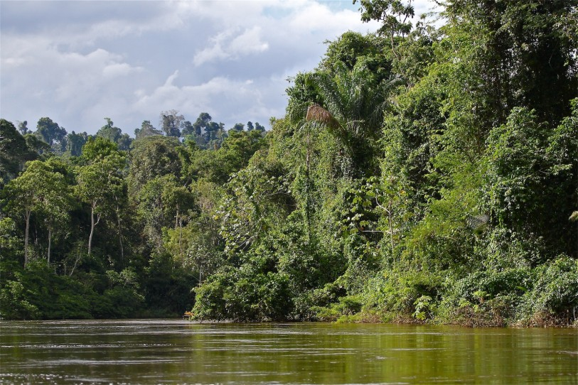 unspoiled rainforest Suriname