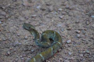 wildlife trips suriname