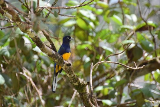 birdwatching trips suriname