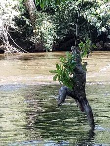 luiaard kreek Boven Suriname