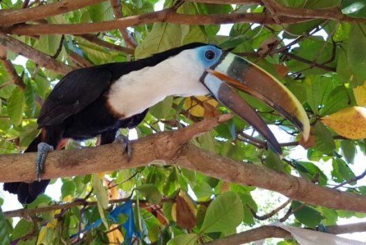 Boven Suriname rondreis vogels