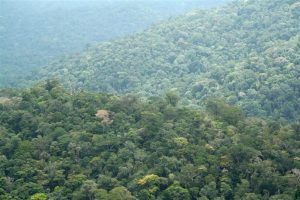 jungle in Suriname