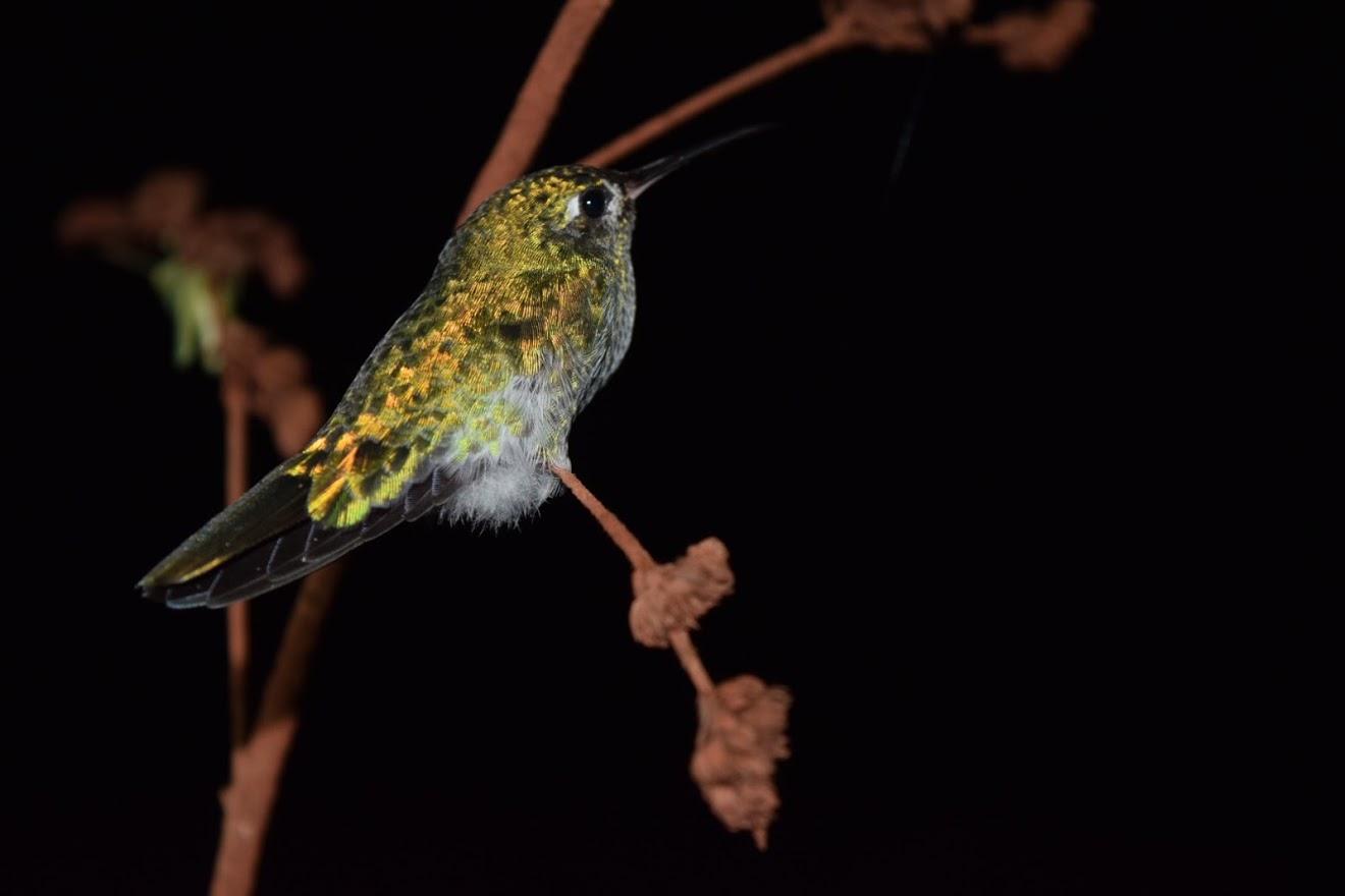 birding trips suriname