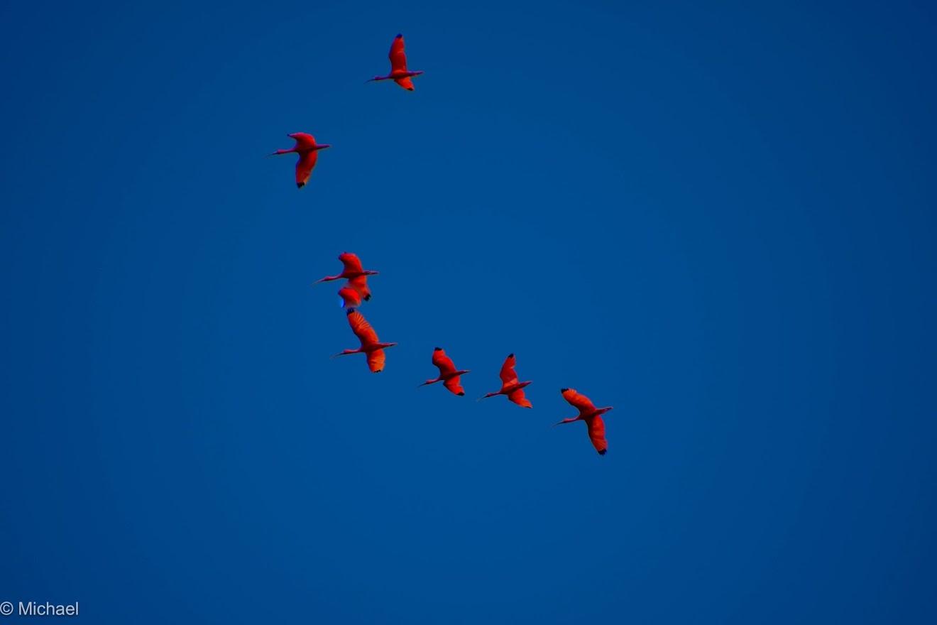 birdwatching trips suriname